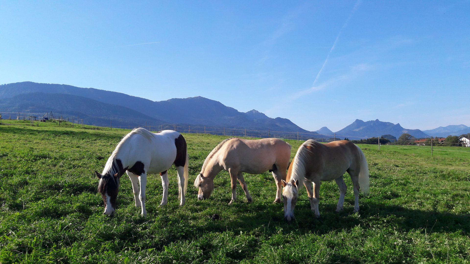 Entwurmung Pferd Wurmkur