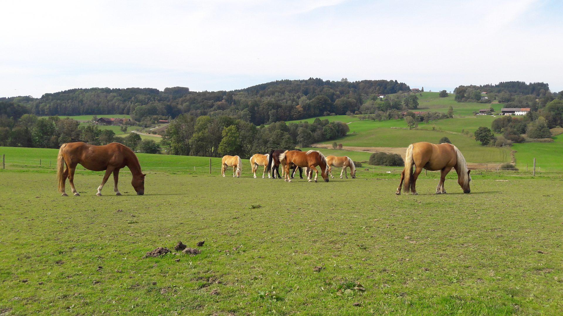 Entwurmung Pferd Strongyliden