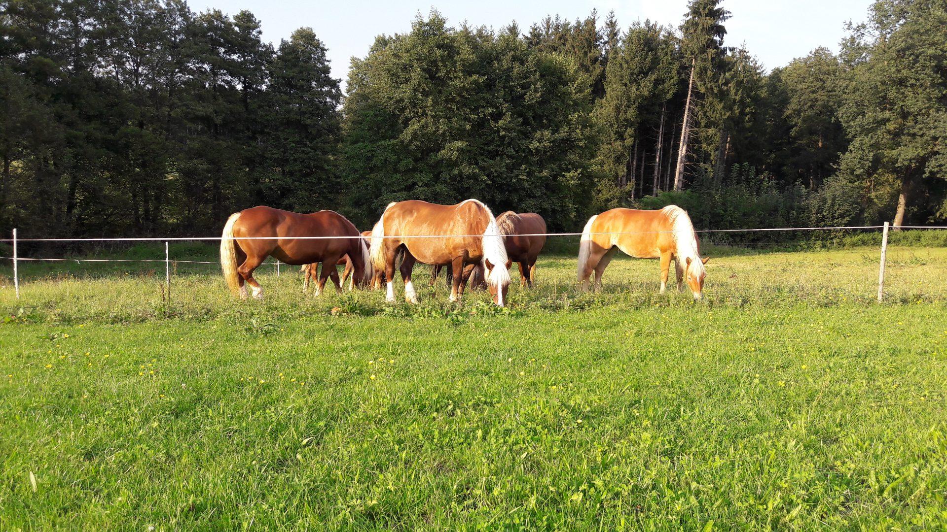 Entwurmung Pferd Bandwurm